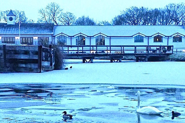Winter at the Club - swans on the lake